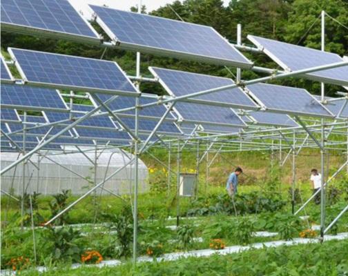Mộ hình trang trại nuôi dê tại Ninh Thuận của anh Tuấn (h1). Với diện tích khoảng 3 hecta, được lắp đặt 3MW tấm pin năng lượng mặt trời trên