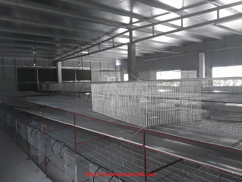 lắp đặt camera quan sát trang trại nuôi rắng mối