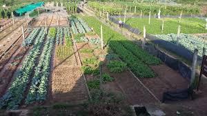 giải pháp lắp đặt camera quan sát cho trang trại, camera quan sát cho trang trại, camera quan sát cho vật nuôi, camera quan sát cho cây trồng.